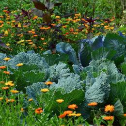 avenir de la permaculture dans la société comme art de vivre