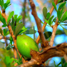quels sont les bienfaits de l'huile d'argan